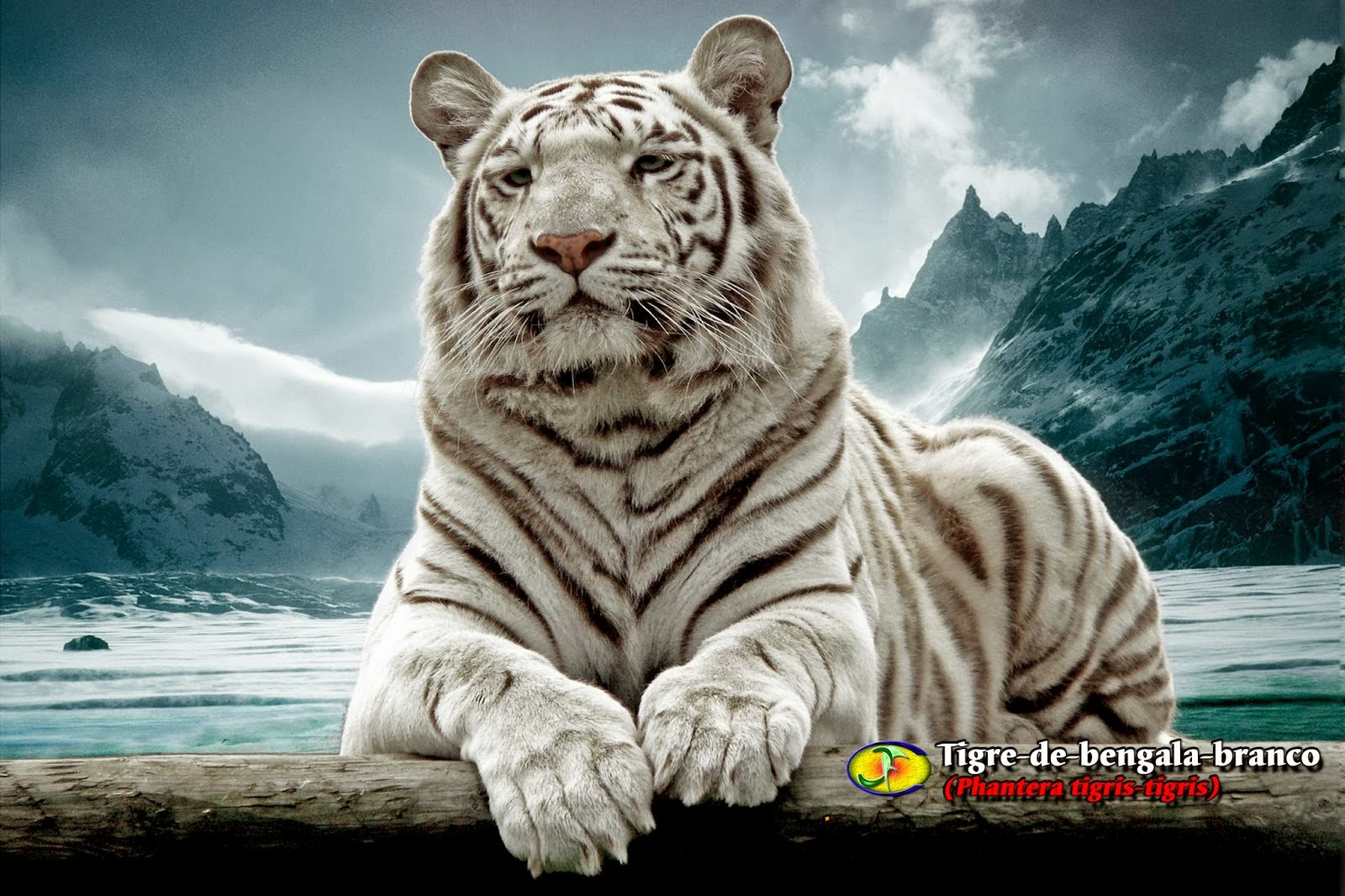 El Tigre de Bengala | Animales Salvajes - Planet Doc - YouTube