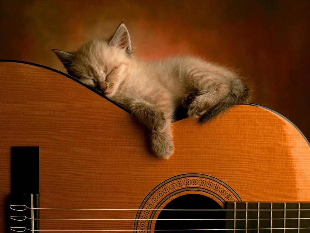 Bienvenidos al nuevo foro de apoyo a Noe #250 / 28.04.15 ~ 30.04.15 - Página 3 Paisaje+con+animal+gatito
