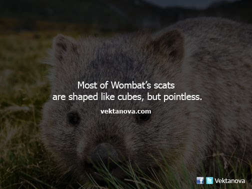 Wombat Scats