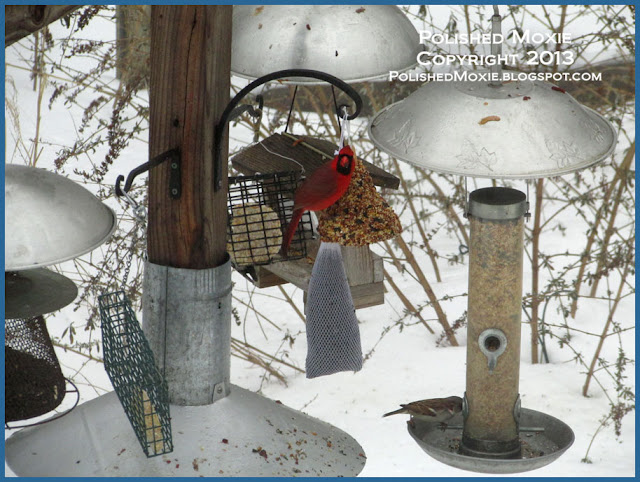 Picture of male cardinal on seed bell.