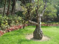 Tree in Hong Kong Park