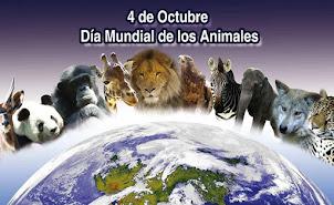 Mes de los animales