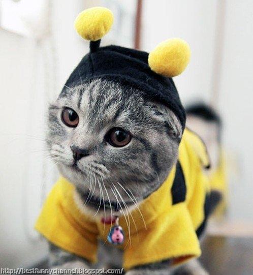 Cat dressed Bee.