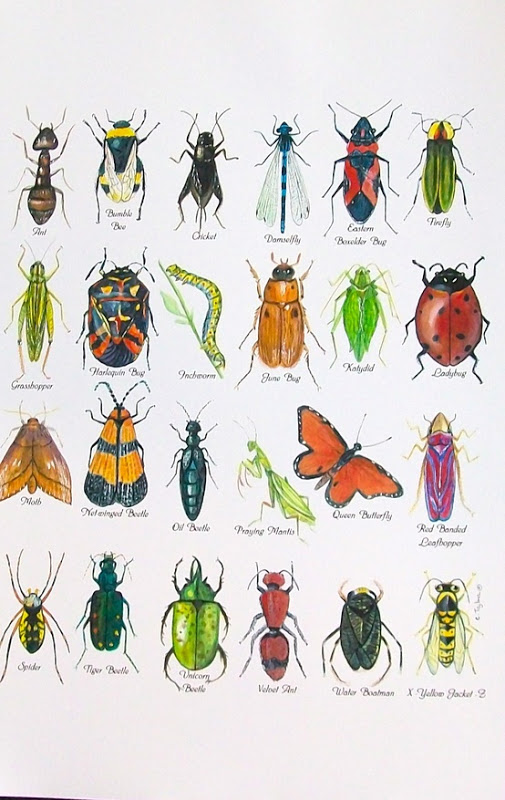Chumleyscobey Art Room  1st Grade Insect Diagrams