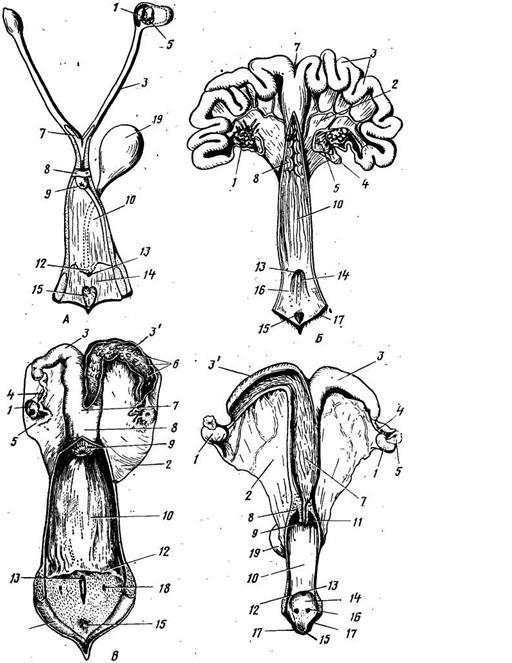 Фото крупным планом женских половых органов