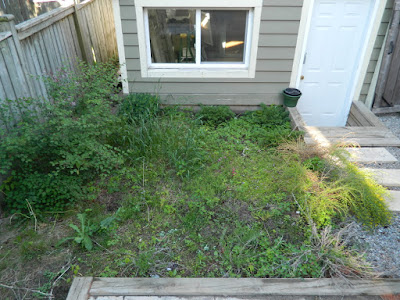Leslieville xeriscape garden install before by Paul Jung Gardening Services Toronto