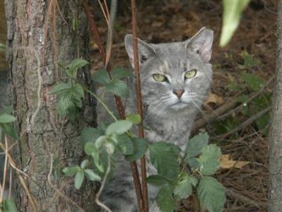 Kelebihan kucing kampung yang hidup di desa dibandingkan kucing kampung di kota