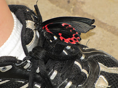Butterfly on Boy's Tennis Shoe