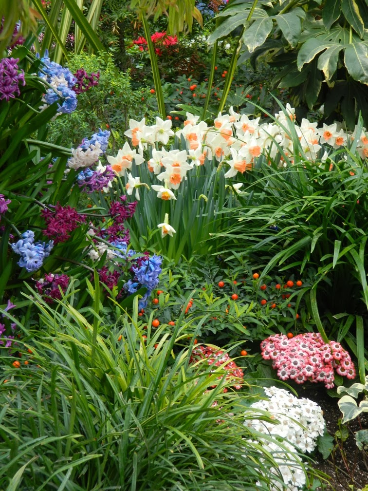 Allan Gardens Conservatory Spring Flower Show 2014 blue purple hyacinths by garden muses-not another Toronto gardening blog