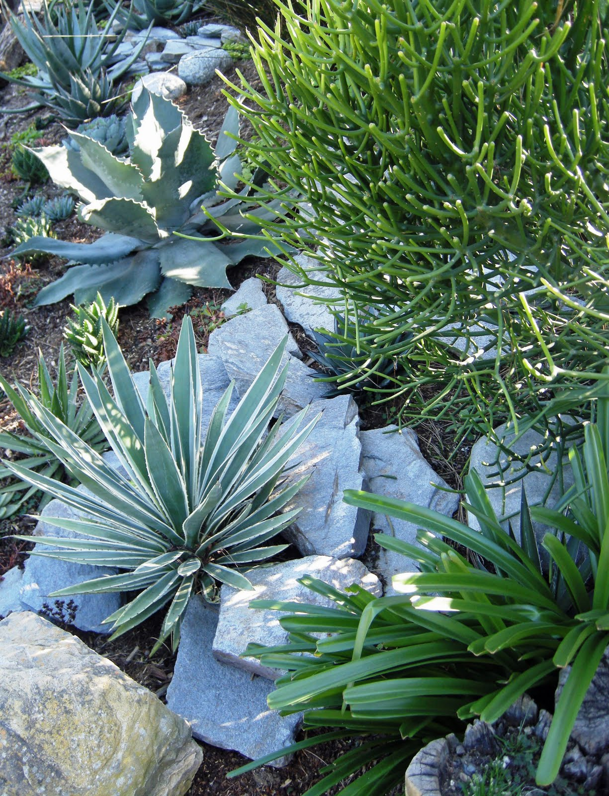 Landscaping Ideas For Shady Hillside : White rocks blue green succulents on a shady hillside