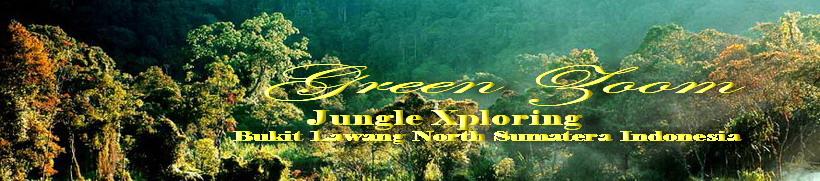 Green Zoom Jungle Xploring Bukit Lawang North Sumatera Indonesia