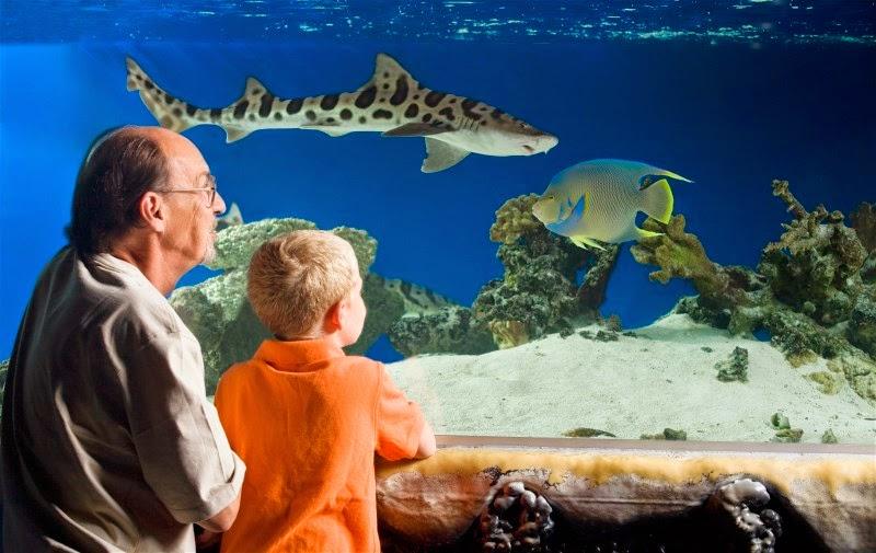 What To Do In San Antonio 50 Off San Antonio Aquarium