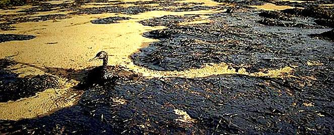 Medio ambiente suelos contaminados por hidrocarburos - Suelos radiantes por agua ...