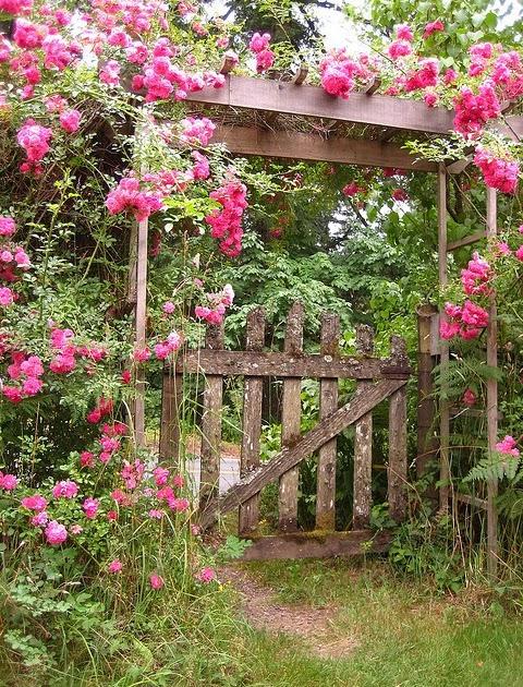 flores do meu jardim letra: DO BRASIL: SETEMBRO CHEGOU E NOVAS FLORES NO MEU JARDIM TAMBÉM