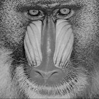 Grayscale Baboon