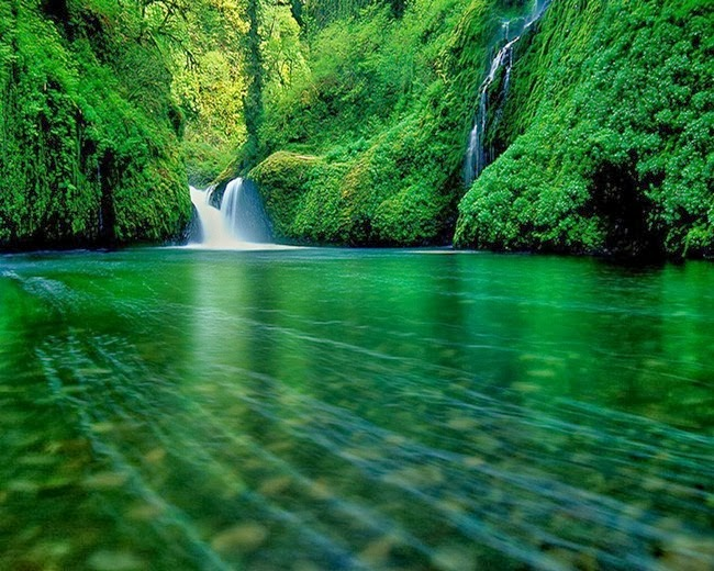 http://www.funmag.org/pictures-mag/nature/beautiful-green-nature-28-photos/