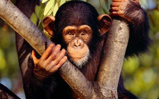 Resultado de imagen para monos
