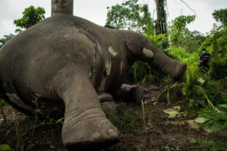 41 Gajah Zimbabwe Mati Diracun