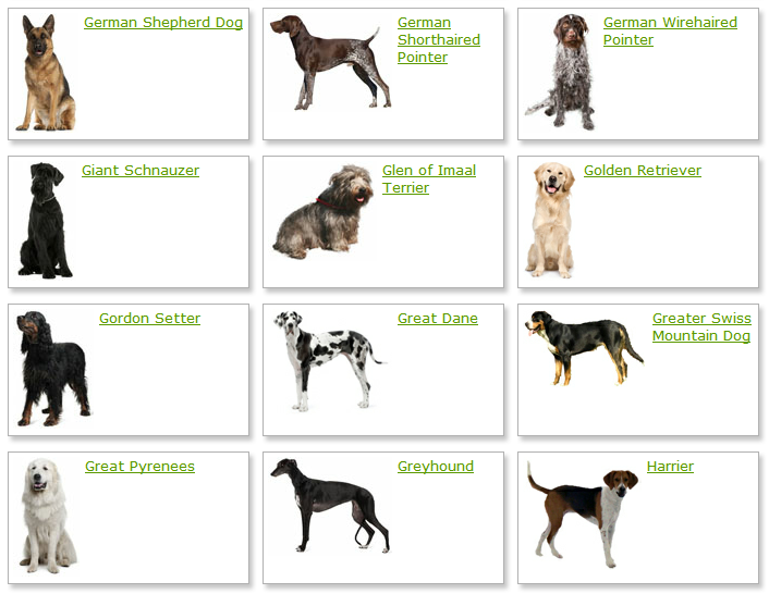 List Dog Breeds