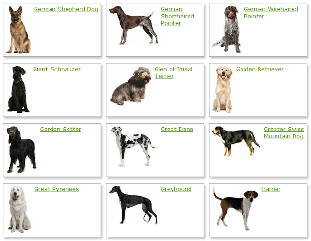 All List Of Different Dogs Breeds: Dog Breeds List With ...