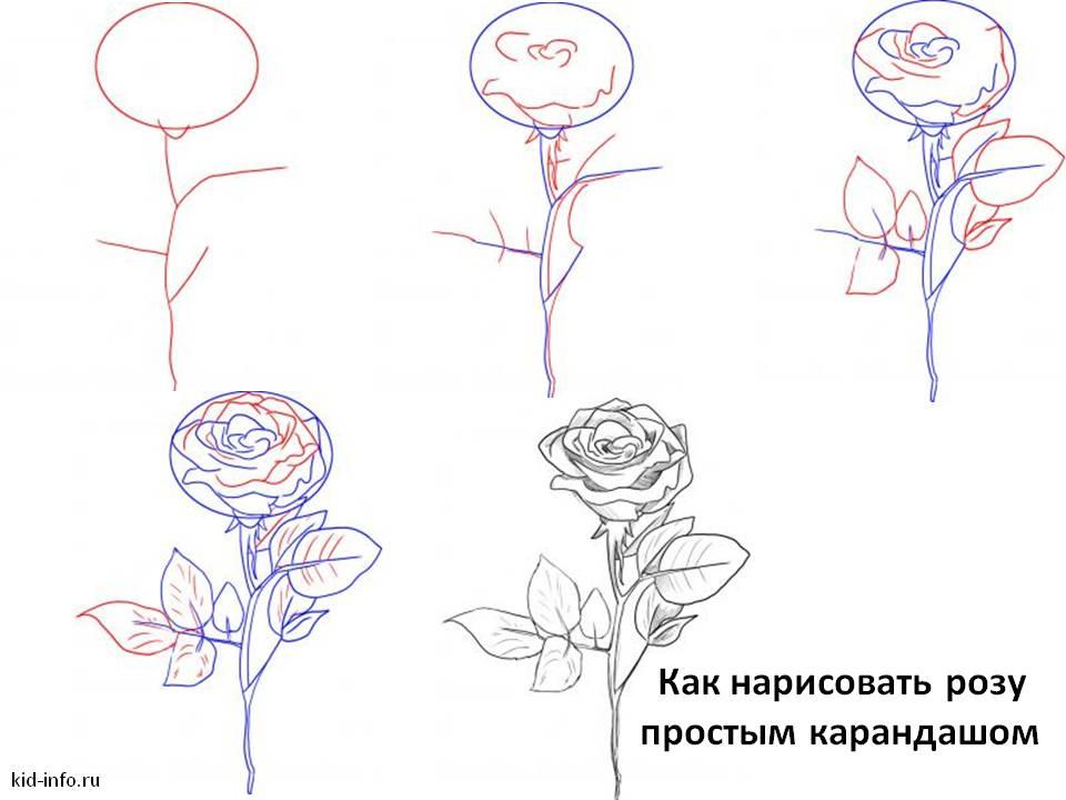 Как нарисовать розу поэтапно.