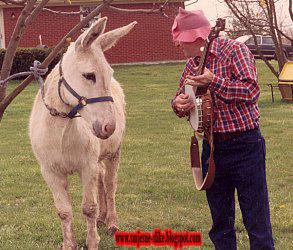 Smjesne slike, konj, kocijas, fiaker