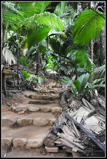 Seychelles 2012 120201 praslin vall e de mai - Sortes de palmiers ...