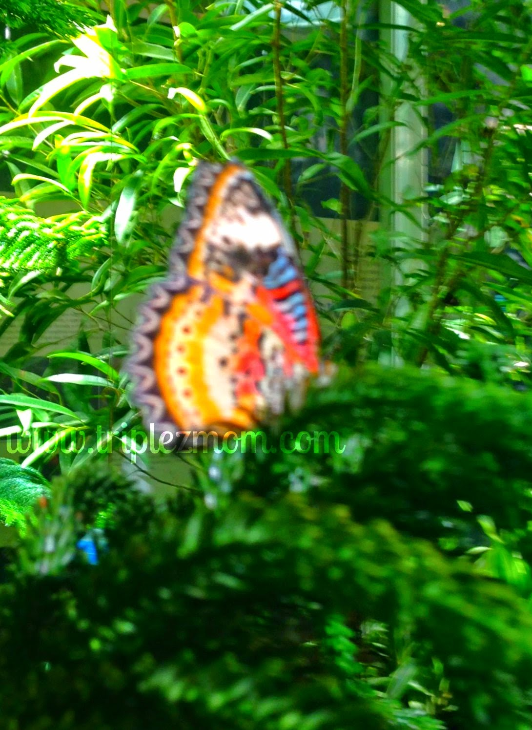 Butterfly photo.