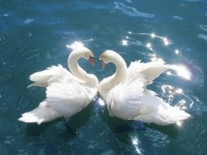 vad står svanen för