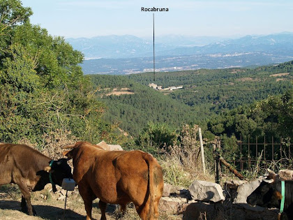 Rocabruna des de la Bassa de Postius