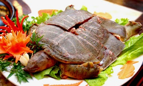 Steamed Soft-shell Turtle with Ginger (Ba Ba Hấp Gừng)1