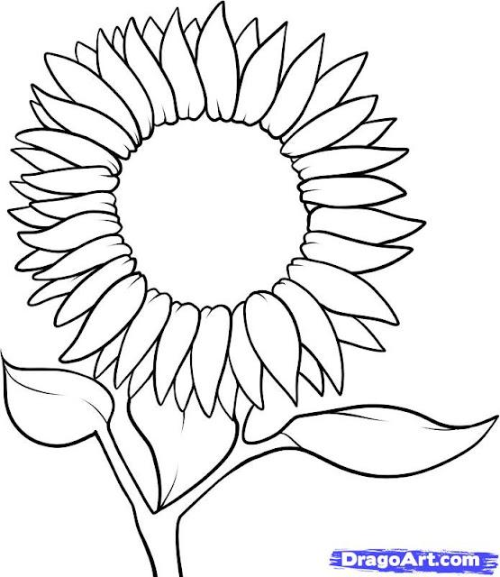 ดอกทานตะวันลายเส้นระบายสี