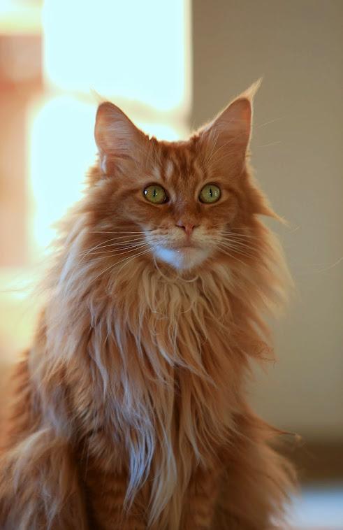 meine süße Katze, Betty