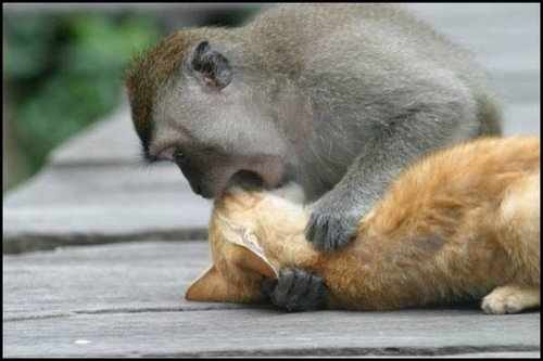 Very funny pictures of love