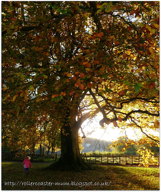 autum tree - Weald and Downland Open Air Museum