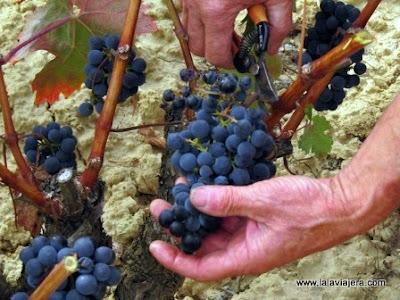 Vendimia Rioja Alavesa