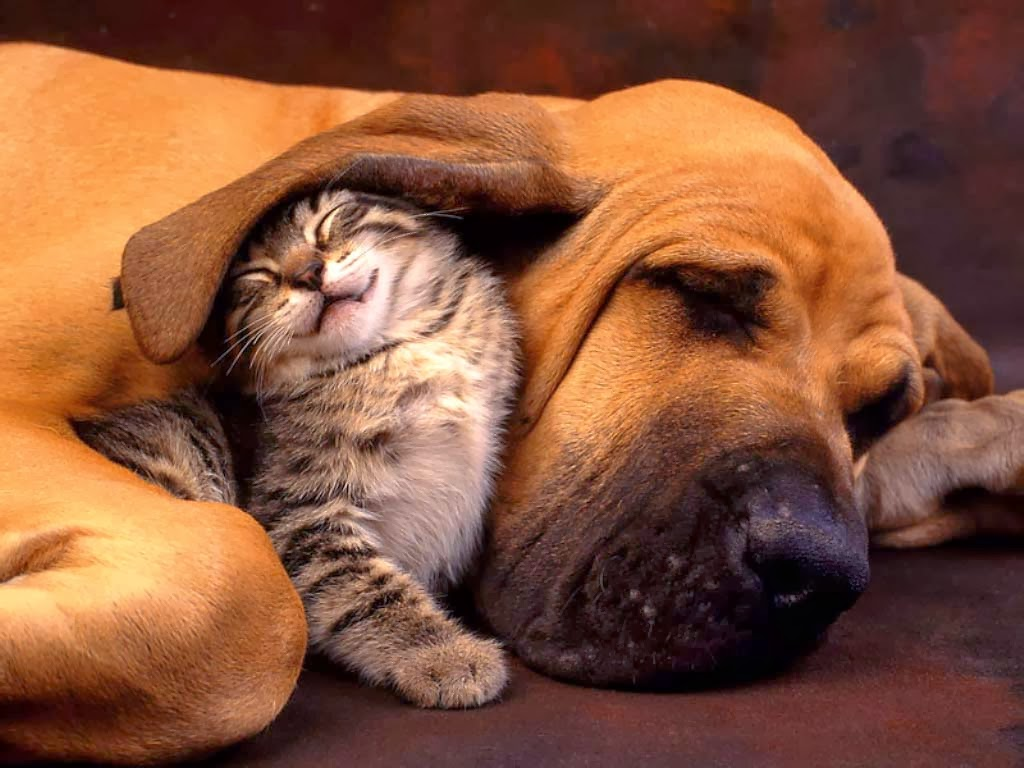 Most Inspiring Cute Dog N Cat Wallpapers - Dogs-and-Cats-Wallpaper  Snapshot_934072 .jpg