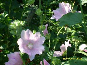 Talkkaripalvelumme kautta puutarhapalvelua puh: 044-3380291
