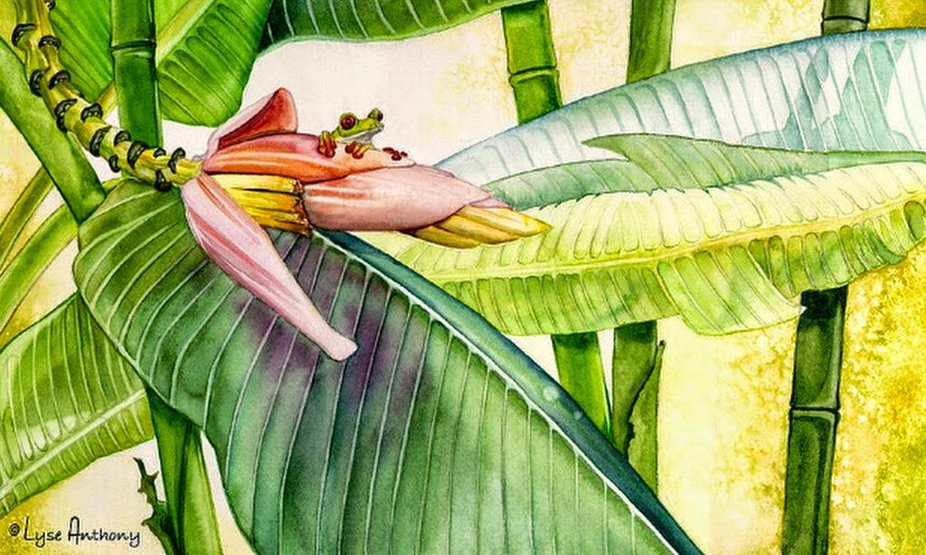 imagenes-flores-exoticas-tropicales