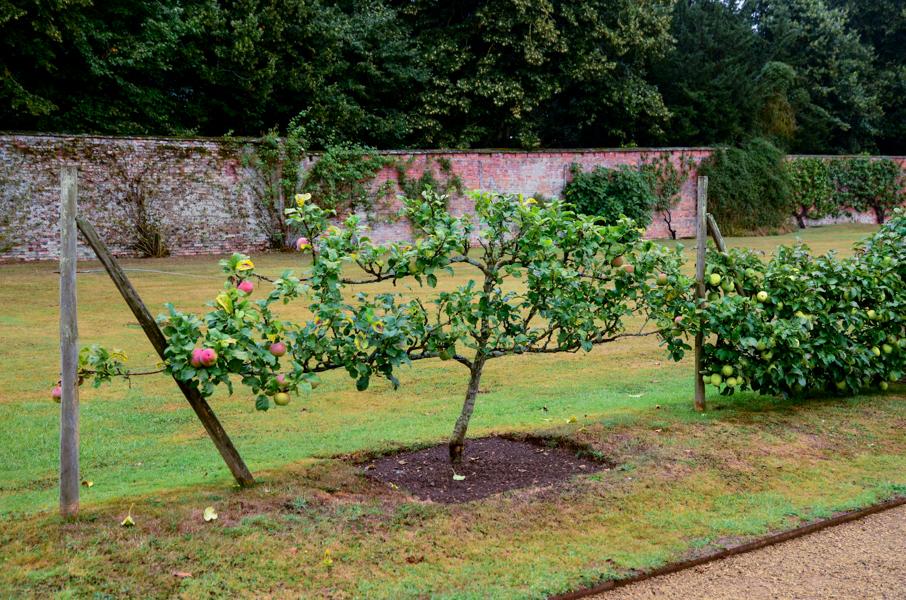 plante epletre