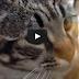 El macetero que salvo al gato