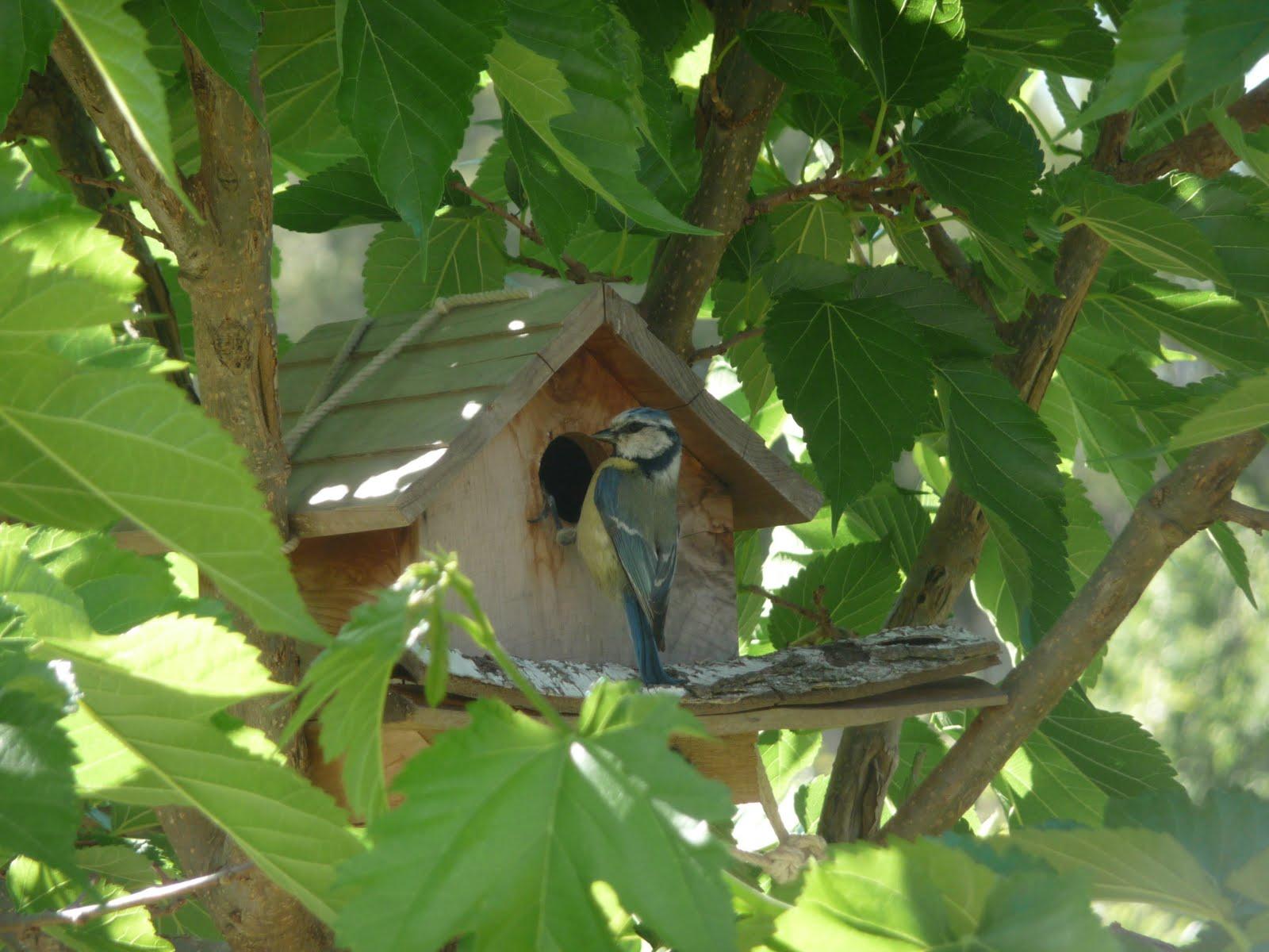 Chambres d 39 h tes puyloubier chez annie bienvenue la for Oiseaux de jardin au printemps