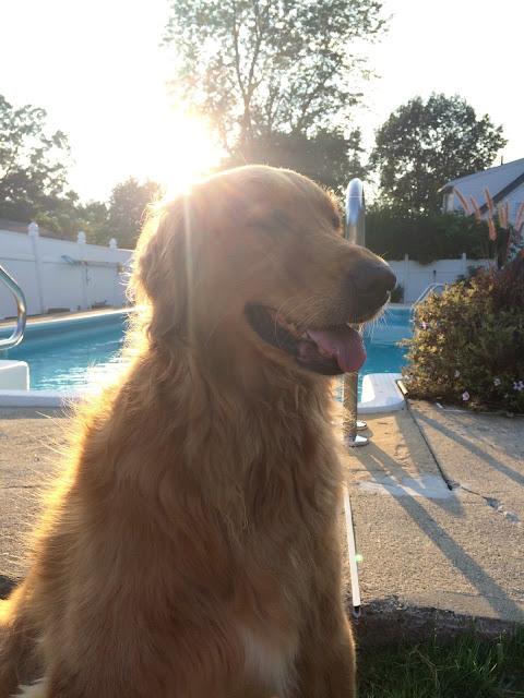 dog enjoying sunset by pool wordless wednesday