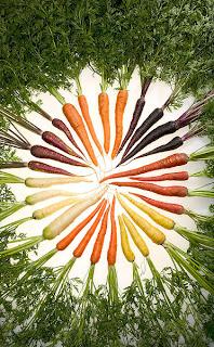 zanahoria, carrot, naranja, holanda, color de zanahorias, curiosidad