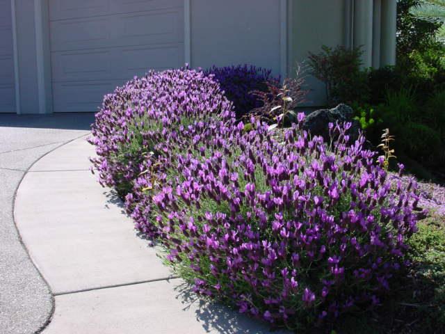 Arte y jardiner a plantas vivaces Plantas jardineras exterior