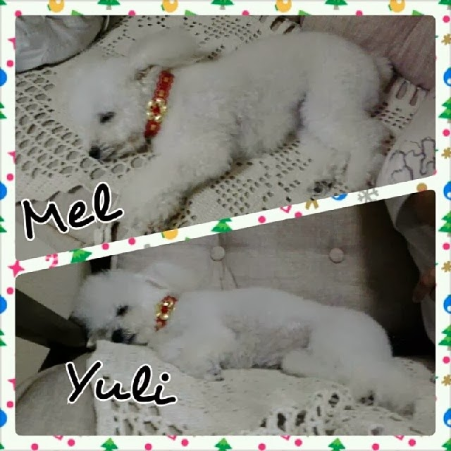 Mel e Yuli