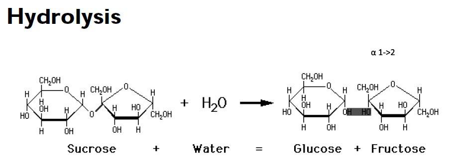 Bio Blog ☆: Carbonhydrates