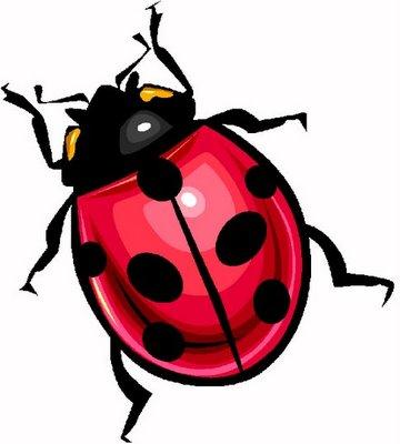 Pulg n acabar con los pulgones de forma natural for Como acabar con las hormigas del jardin