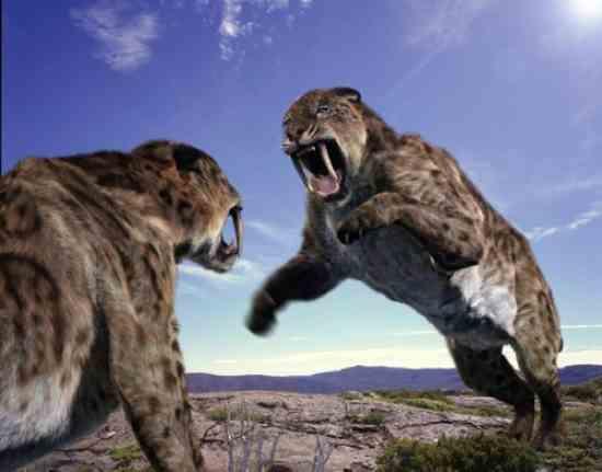 10 Jenis Kucing Prasejarah Terbesar di Dunia