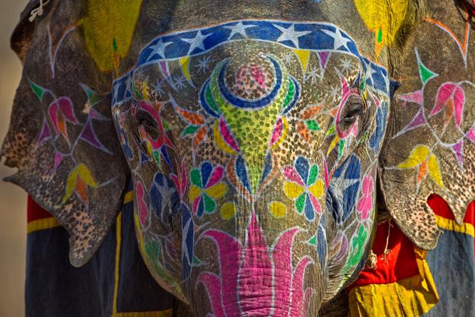 Dera Amer Elephant Safari Jaipur